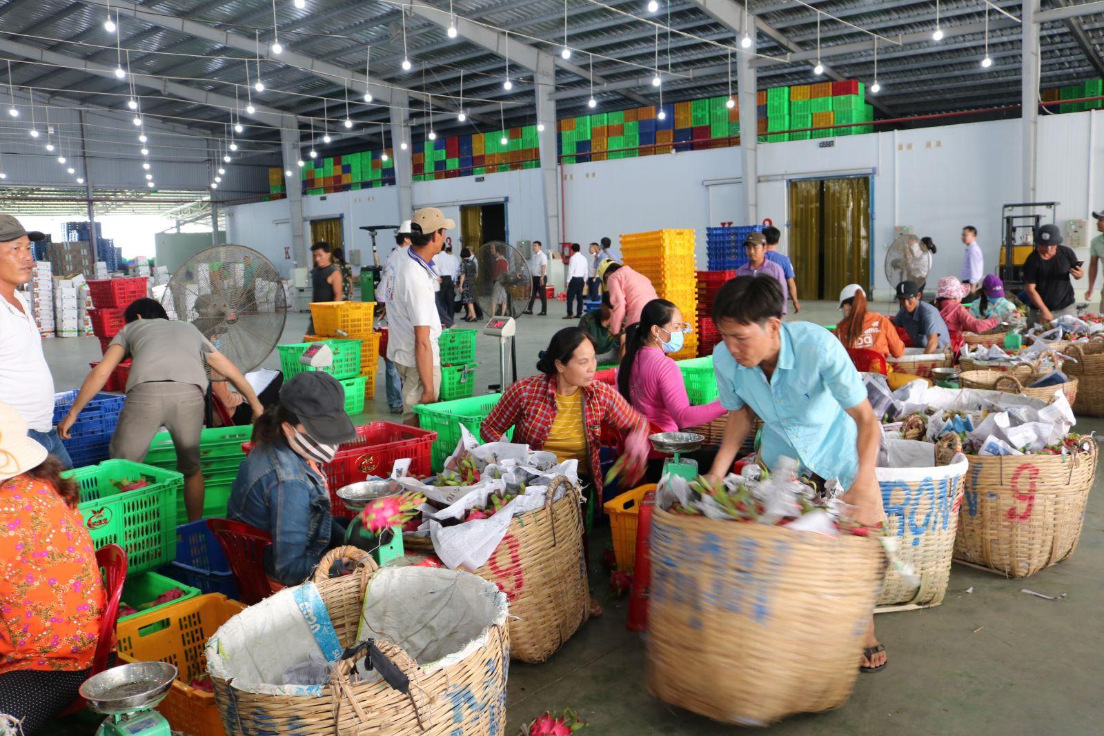 Hợp tác xã nông nghiệp hoạt động hiệu quả sẽ góp phần trong xây dựng nông thôn mới