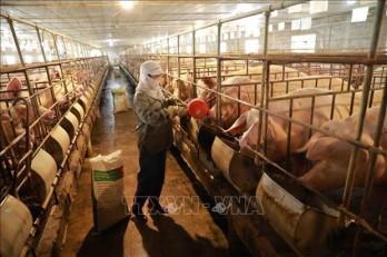 Building disease-free zone - key to animal husbandry: Minister