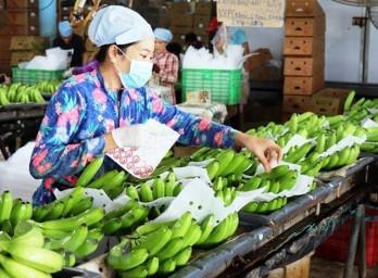 Fruit & vegetable exporters should tap into Northern Europe's niche market: Newspaper