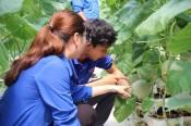 Cầu nối giúp đoàn viên, thanh niên tiếp cận vay vốn phát triển kinh tế