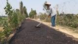 Trồng mồng tơi lấy hạt - hướng đi mới giúp nông dân tăng thu nhập