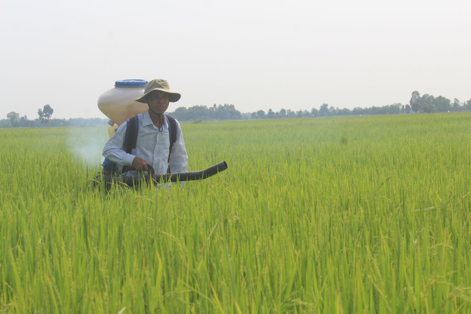 Giá phân bón tăng, nhiều nông dân lo lắng, bởi vụ Hè Thu này, mỗi hécta trồng lúa tăng từ 2-3 bao phân bón so với vụ Đông Xuân