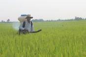 Giá phân bón tăng, nông dân lo lắng