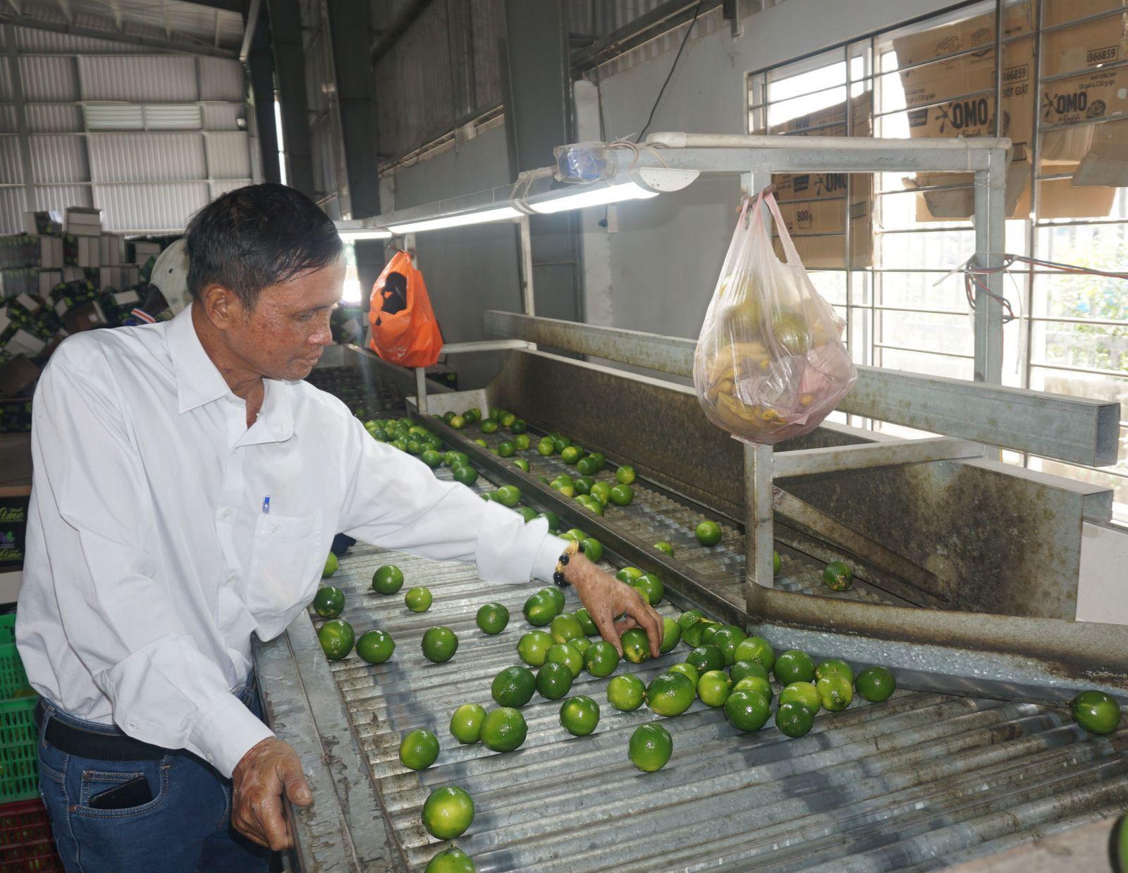 Anh Trần Duy Thuận - Giám đốc Hợp tác xã Dịch vụ Nông nghiệp huyện Bến Lức, tiên phong cơ giới hóa trồng chanh