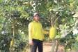 Bảo vệ vườn cây ăn quả trong mùa khô
