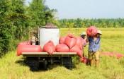 Các huyện phía Nam: Tập trung thu hoạch lúa Đông Xuân 2020-2021