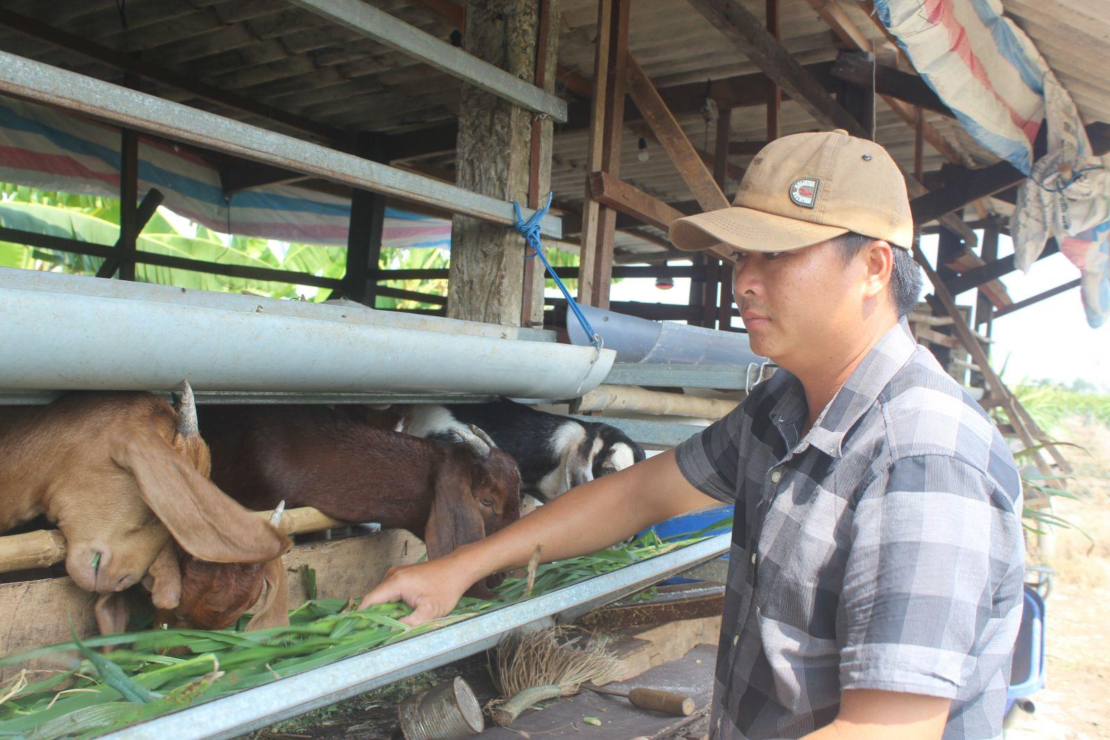 Chưa đến 100m2 nhưng mô hình chăn nuôi dê của anh Linh đang mang lại hiệu quả kinh tế rất cao, bình quân lợi nhuận trên 100 triệu đồng/năm