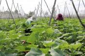 Để hợp tác xã nông nghiệp ngày càng phát huy hiệu quả