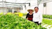 Hợp tác xã rau an toàn Phước Hòa: Khẳng định vị thế nhờ chất lượng