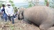Kinh hoàng cả đàn 18 con voi mất mạng cùng lúc vì sét đánh ở Ấn Độ