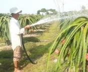 Cần có nhiều chính sách hỗ trợ nông dân sản xuất